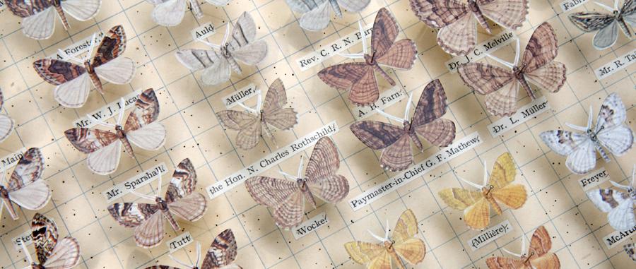 Robert Good Moths of Great Britain