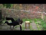 soukup - chair chair sit inbetween video still-72dpi